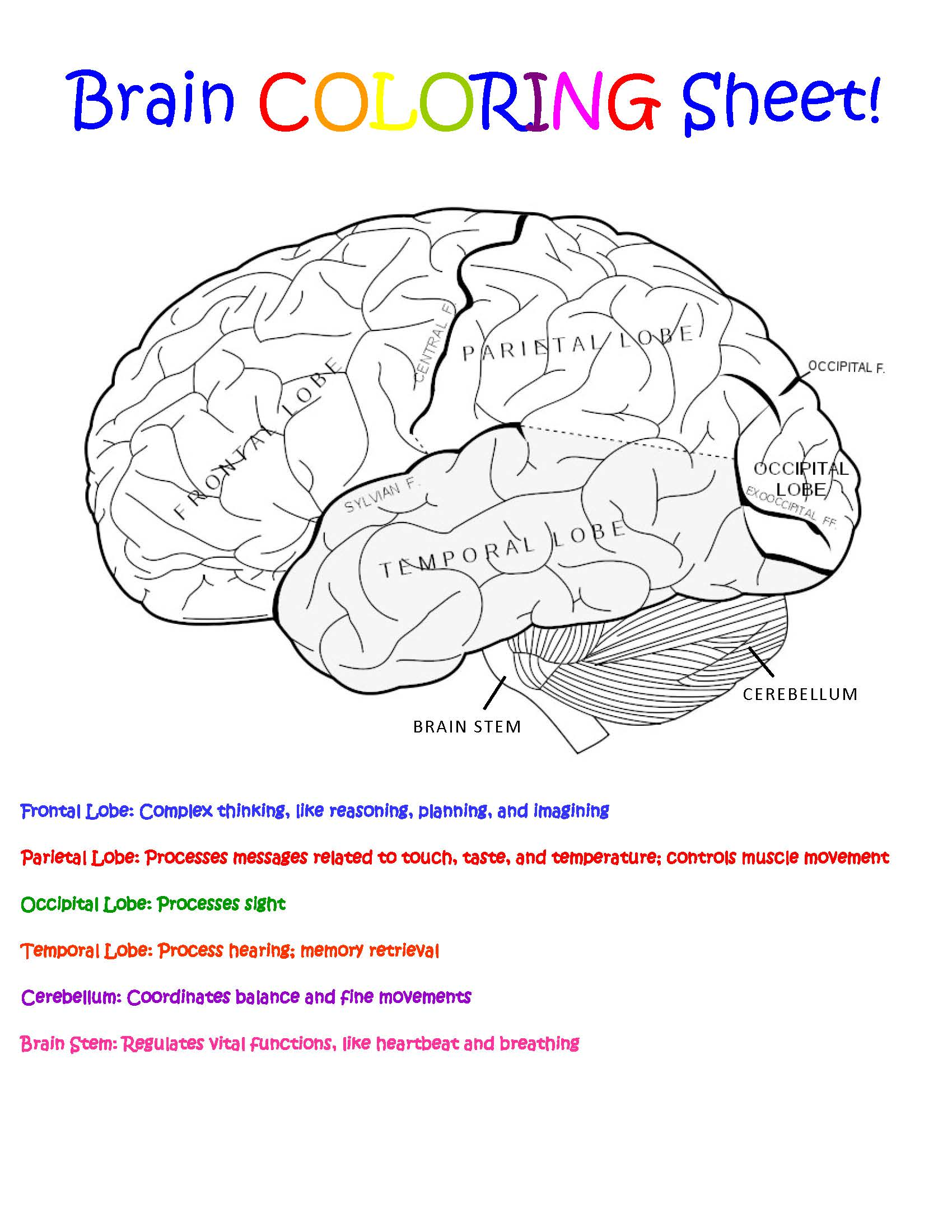 29+ Brain Coloring Page With Labels